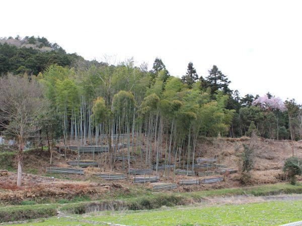 里山防災林整備 基本計画調査業務(夢前町 宮置)